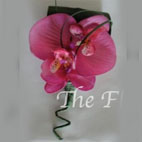 Pink Real Touch Phylaenopsis Orchid Buttonhole